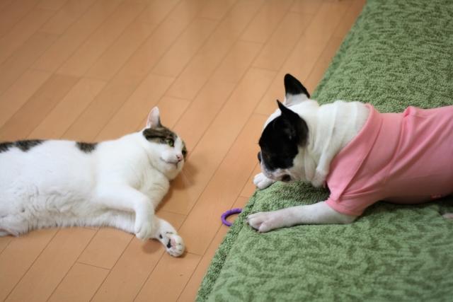 犬と猫の防カビ